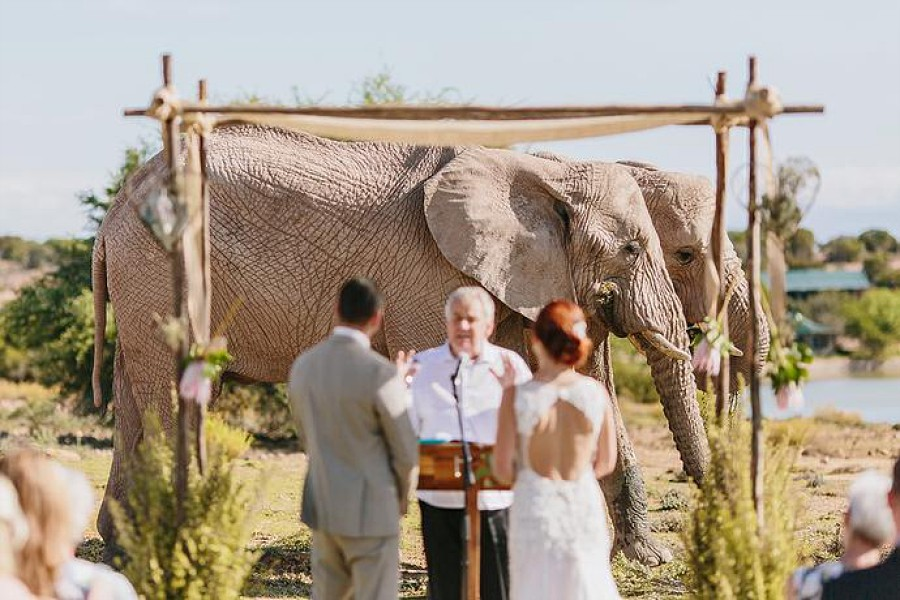 Destination Africa Wedding
